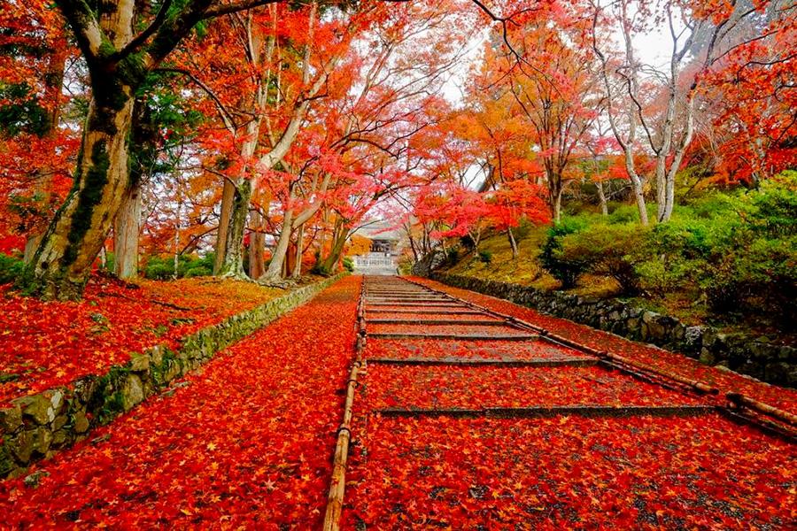 穴場スポットも! 京都山科・秋の紅葉名所ガイド そうだ 京都、行こう。